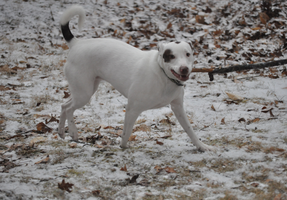 look at me prance with my bigass stick by Aero-Synn