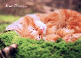 Kitten Dreams by samXwow
