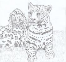mother leopard by Anna-XIII