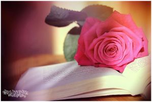 Pink Rose Book by Clerdy