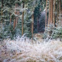 cold morning II by indojo