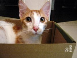 Ginger in box by tamaow