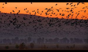Awakening With Birds by IgorLaptev
