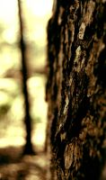 Bark Close up 2 by detihw