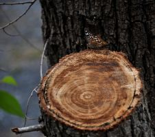 Tree Stump Thing by Suinaliath