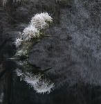 Brathay Frost. by gsphoto