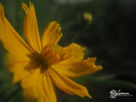 Flower Marikina 91 by jsonn