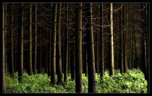 Forest IIII by Lilia73