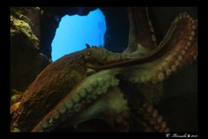Dr Octopus - The real one by DarkWolf1989