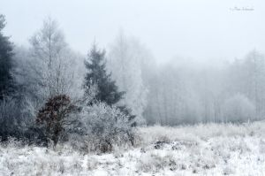 Purity of the white death. by Phototubby