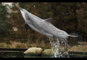 Jump by Sophie1990