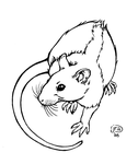 Rattie Lineart by Aycelcus