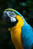 STL Zoo: Parrot I by breaking-reality