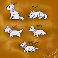 Snowbell Obedience Titles by WinchesterCrossroads