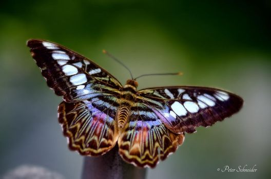 Flying colours (II). by Phototubby