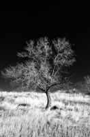 Bare tree in black and white by Circusdog