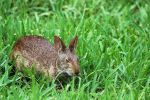 Rabbit at the Contemporary Resort at Disney World by winterface