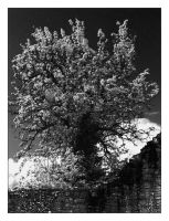 IR Tree by xyster