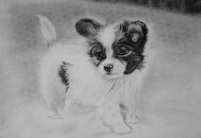 WIPs Puppy Chihuahua part 2 by syellameonk