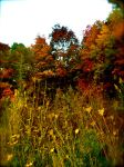 Autumn by sk8rshelie