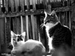 Gatos ao sol by siddpires