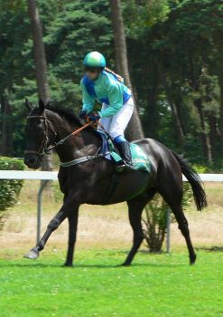 Thoroughbred  Stock 29 by Feuersglut