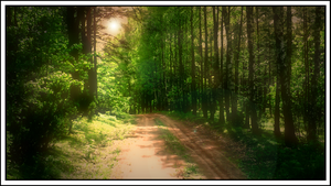 forest path2 by LongmanPL