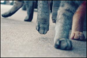 paws. by grihmphotography