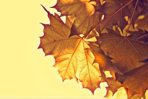 Summer Leaves by doyles-slave
