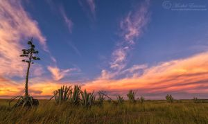 Agave Sunset by MorkelErasmus
