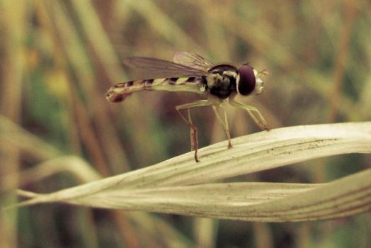 Miss Hover Fly 2 by Youcef07
