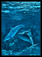 Dolphins 2 by CreativeNitemare