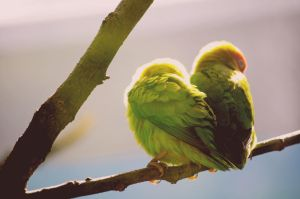 Love Birds by IsabellaPrins