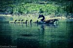 Family Outing by PixiePoxPhotography
