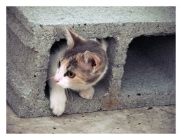 Another Cat in the Wall by olivv