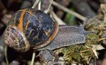 Snail after the rain by priwax