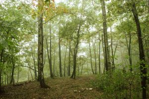 Forest 4 by Janine-Autumn