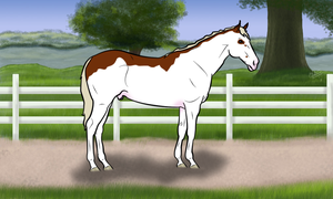 LAWLIET  - SOLD by Lily-Pad-Stables
