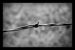 Barbed.Wire.Closeup by MasterC88
