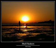 Shell Seakers by In-Apt
