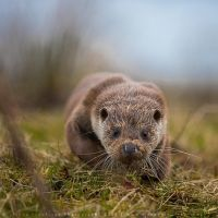Sneaky Otter by linneaphoto