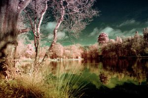 Infrared Waterscape by lorni3