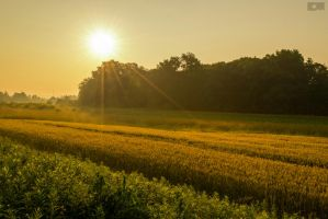 Fields of gold by CycleMotion