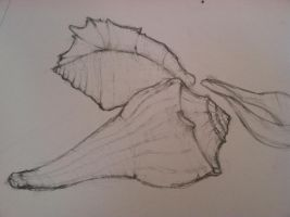 Shell Sketches(wip) by MartyMurray