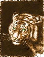 Tiger Pencil- digital color by Spectrum-VII