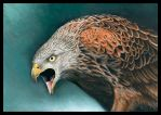 The Red Kite by Heliocyan