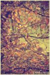 To Autumn by Knajfer
