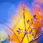 winter dreaming by SaphoPhotographics