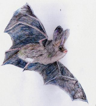Bat by KiltedFish