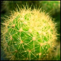 ..:: Cactus ::.. by nyndream